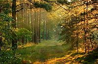 Woodpath